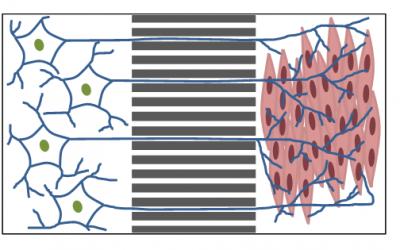 Isolate microglia to axons using Xona devices
